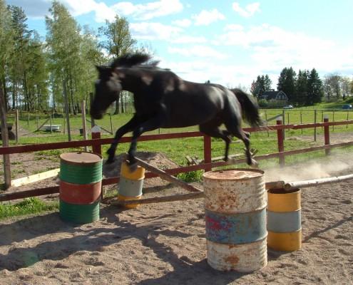 Calinka hoppar