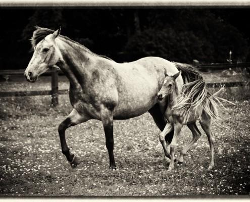 Percy och Embla