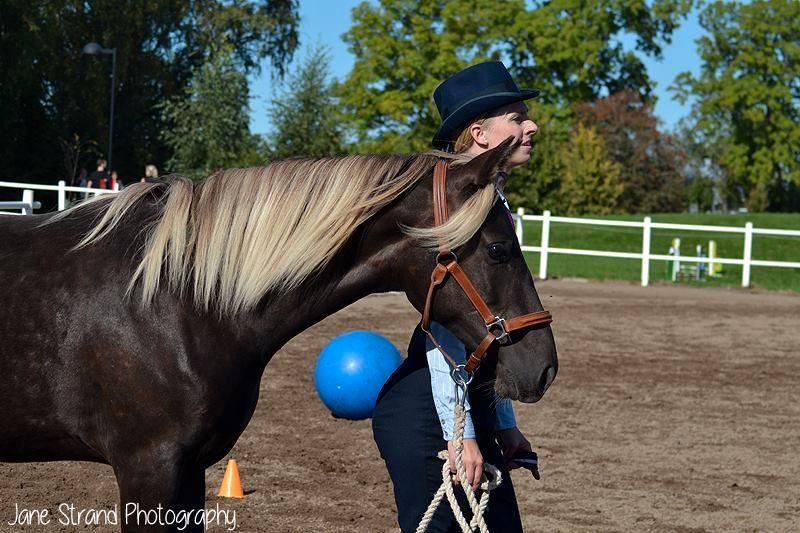 Ullekalvs Esmerée (Mira), 1 år, på Östgötahäst förra året.
